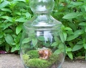 YART SALE - FREE SHIPPING -Woodland Friend - Garden in a Jar - Home Ecosystem - Great Gift Idea - Nature Inspired Gift