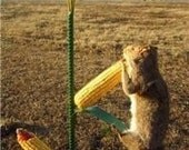 Iowa Corn Bird and Squirrel Feeder by Junkfx  Don Hutchings