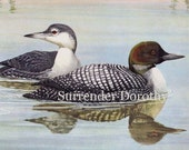 Common Loon Family Natural History Ornithology Waterfowl Illustration Fuertes 1950s