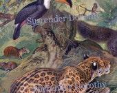 Birds Animals Asia Asian Fauna 1887 Vintage  Victorian Antique Natural History Chromolithograph Illustration