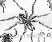 Vintage Spiders Scorpions Arachnid Family 1887 Victorian Insects Arachnology Natural History Engraving To Frame