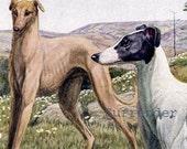 Greyhound Dogs Louis Agassiz Fuertes 1910s Original Edwardian Antique Lithograph To Frame
