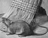 Brown Rat House Mouse Louis Agassiz Fuertes Rodent Lithograph Illustration 1950s Natural History