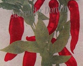 Red Hot Chili Peppers Healing Medicinal Plants 1907 Edwardian Vegetable Lithograph Vintage Kitchen