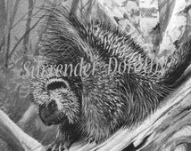 Porcupine Louis Agassiz Fuertes Vintage Natural History Lithograph Illustration For Framing 1950s