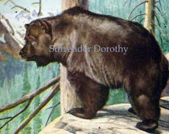 Grizzly Bear Louis Agassiz Fuertes Natural History Lithograph Illustration To Frame