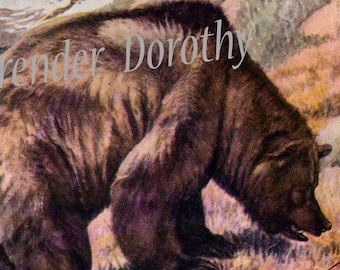 Alaskan Brown Bear Louis Agassiz Fuertes 1950 Natural History Illustration To Frame