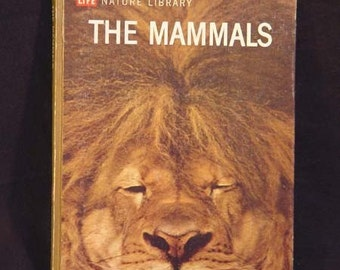 The Mammals Lavishly Illustrated Life Book 1963 Vintage Natural History