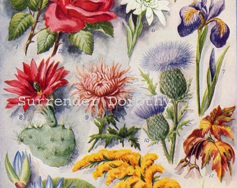 National Flower Chart Of Many Nations 1915 Vintage Botanical Lithograph Print To Frame