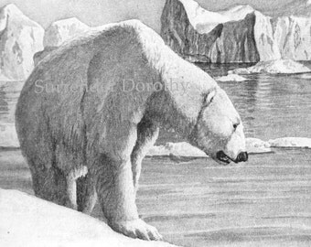 Snow White Polar Bear Louis Agassiz Fuertes 1950s Natural History Lithograph To Frame