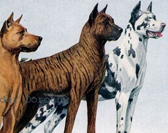 Great Dane Dogs Louis Agassiz Fuertes 1910s Original Edwardian Vintage Lithograph To Frame