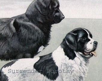 Newfoundland Dog Louis Agassiz Fuertes 1910s Vintage Original Edwardian Antique Lithograph To Frame