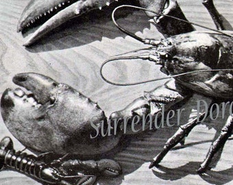 Maine Lobsters Big And Small 1905 Edwardian Era Natural History Rotogravure Illustration To Frame