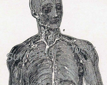 Lymphatic System Human Anatomy Vintage Edwardian Antique Medical Chart To Frame 1908