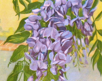 Wisteria Flowers 1920s Country Cottage Garden Old Fashioned Botanical Lithograph Print To Frame