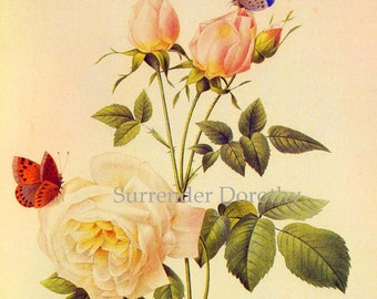 Pink China Rose Rosa Hymenee Vintage Wild Flower Butterflies Redoute Botanical Lithograph Poster Print To Frame 91