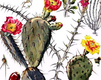Prickly Pear Cactus TattoosPrickly Pear Tattoo