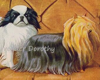 Japanese Spaniel Yorkshire Terrier Pekingese Dogs Louis Agassiz Fuertes 1910s Original Edwardian Antique Lithograph To Frame