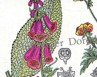 Foxglove Parsley Crow-Foot Valerian Healing Medicinal Plants Botanical Print 1907 Herbalist Chart Original Edwarian Art  XIV