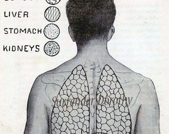 Human Organs Anatomy Chart  Awesome Tattoo  Dude 1920s Weird Vintage Medical Print To Frame Black & White