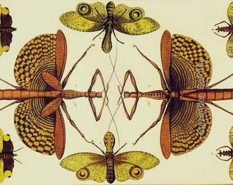 Cicada & Walking Sticks Insects Vintage Seba Entomology Natural History Bug Lithograph Chart Poster Print
