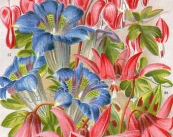 Bleeding Heart Flowers 1922 Jazz Age Botanical Lithograph Print For Framing