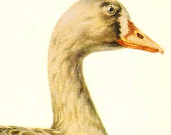 White Fronted Goose Bird Ornithology Natural History Waterfowl Lithograph Print 1960s Illustration To Frame 92