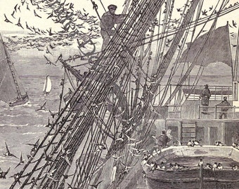 Swallows In The Rigging 1892 Sailing Ship Vintage Victorian Natural History Maritime Illustration To Frame