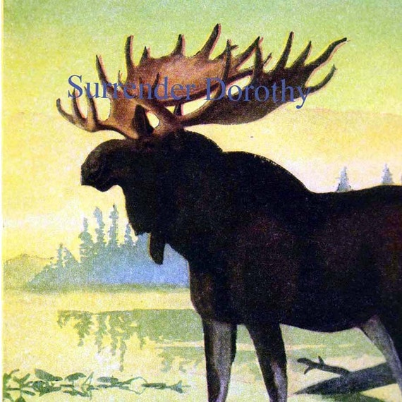 Bull Moose Louis Agassiz Fuertes Natural History Lithograph Illustration 1950s