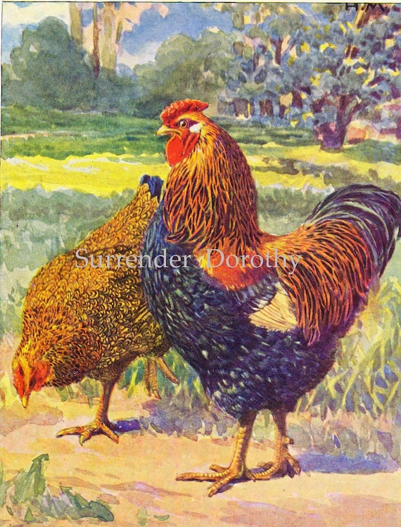 Chickens Partridge & Silver Laced Wyndotte Crested Houdan Susex  Hashime Murayama Vintage 1920s Poultry Livestock Lithograph Print
