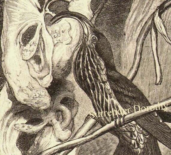White-tipped Sicklebill, Eutoxeres aquila Bird Ornithology Vintage Engraving Illustration 1905 Edwardian Era Natural History To Frame
