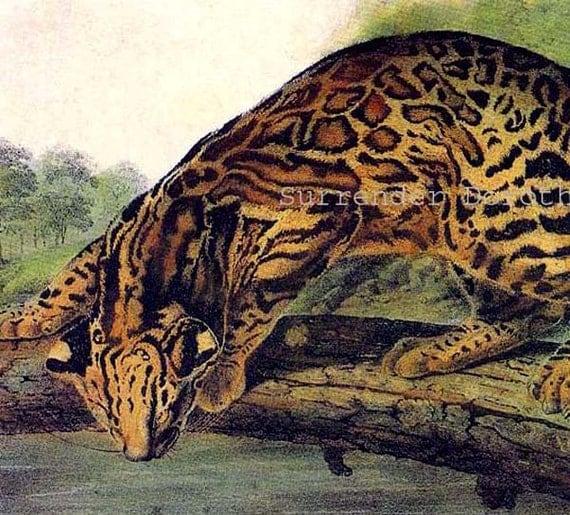 Ocelot Leopard Big Cat Lithograph John J Audubon Wild Animal
