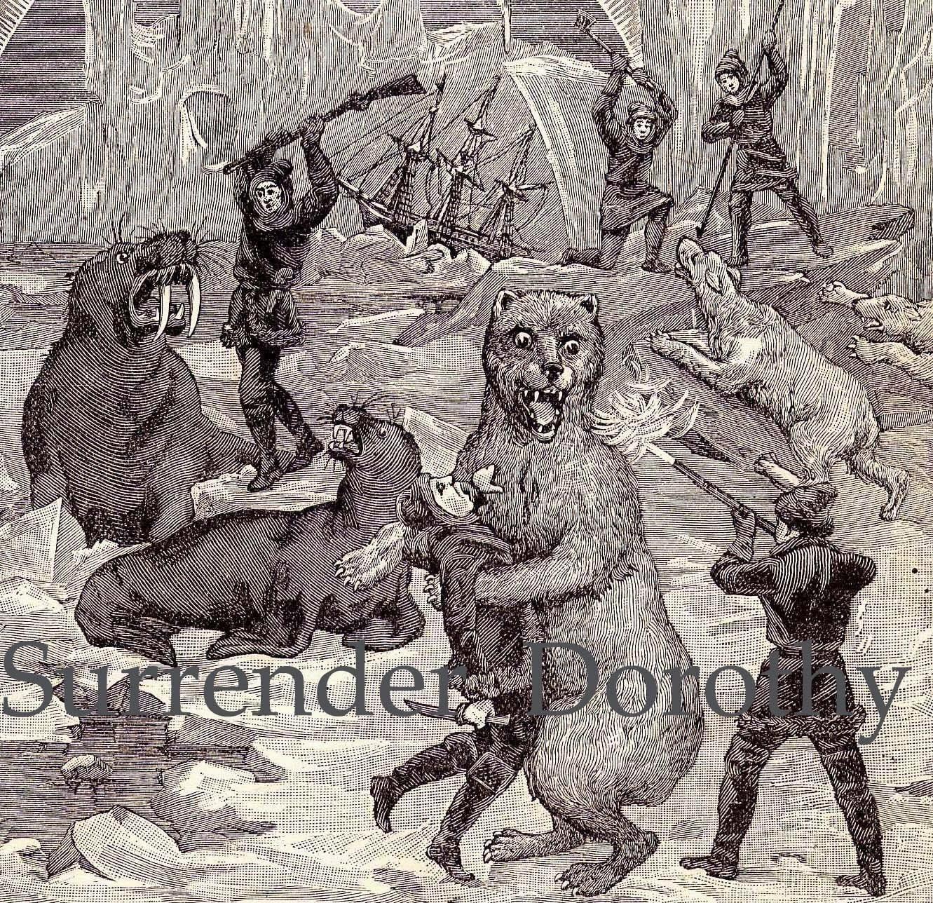 Polar bears walrus explorers weird vintage victorian print of for Odd victorian names