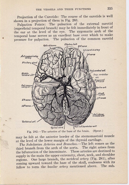 Human Brain Anatomy 19...