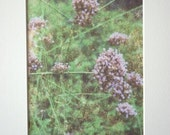 Southern Nature, Purple Blooms print