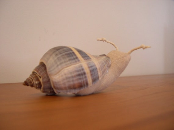 soft snail in a real shell
