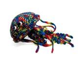 Rainbow jellifish