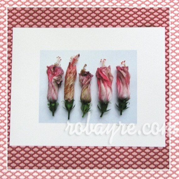 Hibiscus Flower Reproduction Print