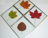 KIT: Glass Coaster Making Kit, SILVER-tone, use with your pressed flowers, pictures, leaves, create a garden gift--DIY glass coaster blanks
