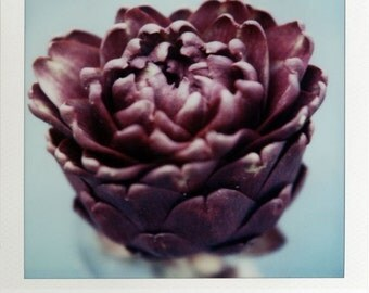 Polaroid Print 5x7 - Purple Artichoke - Fine Art Photography
