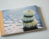 Sea Urchins Journal