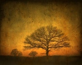 October- 8 x 10 tree print