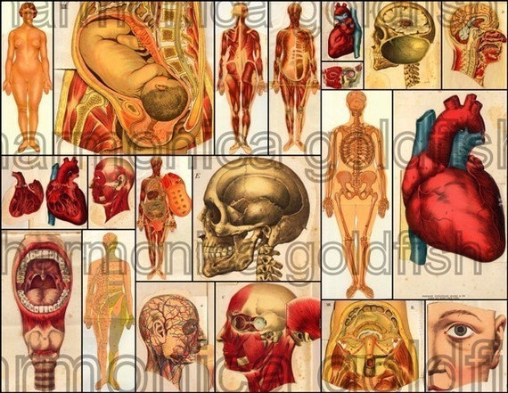 ANATOMY oF THe HUMAN BODY DIGITaL CoLLAGE ShEET BrAINS MoUTHS HeADS aND BaBIEsS .025
