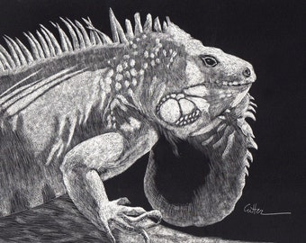Iguana Reproduction of Scratchboard by Diane Cutter with white 8x10 mat / SFA