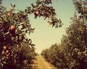 Landscape Photography - Polaroid Photograph - Orchard - Fine Art Photgraph - Apples - Michigan - Nature Photography - Red - Blue - Vintage
