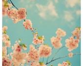 Cherry Blossom - Flower Photograph - Nature Photograph - Spring Photography - Splash Of Pink - Original Fine Art Photograph - Sky - Blue