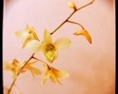 Flower Photograph - Orchid - TTV- Viewfinder Photography - Pink Sugar- Original Fine Art Photograph - Alicia Bock