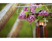 Bike Photograph - Bicycle - Lilac - Spring Photograph - Flower Photography - This Is A Love Story - Fine Art Photograph - Love - Romance