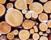 Woodland Art - Polaroid Photograph - Nature Photography - Logs - Winter - Michigan - Wood 1-  Fine Art Photograph - Alicia Bock