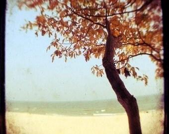 Autumn Photograph - Beach Photograph - Michigan Photography - Burnt Orange and Blue- Fine Art Photograph - Through The Viewfinder - Square